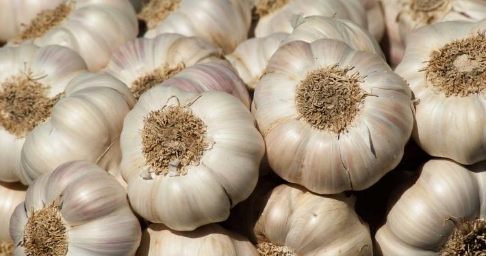 inOrto Bonduelle | domande e risposte - macerato di aglio contro parassiti