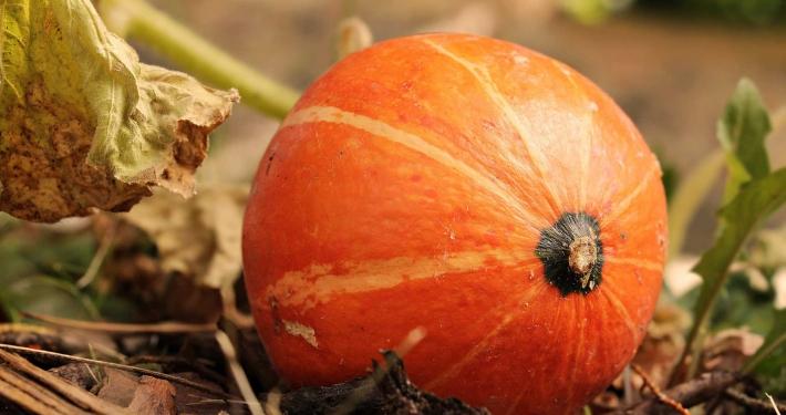 inOrto Bonduelle | coltivare - raccogliere la zucca e conservarla