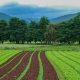 inOrto Bonduelle | domande e risposte - coltivare in montagna